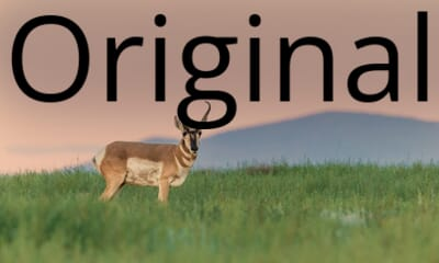 Original image, not cropped